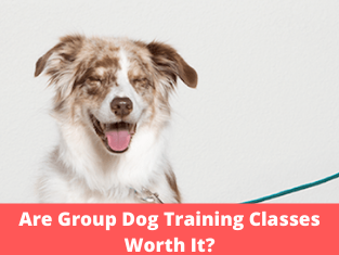 Are Group Dog Training Classes Worth It?