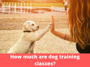 How much are dog training classes?