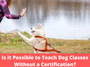 Is it Possible to Teach Dog Classes Without a Certification?