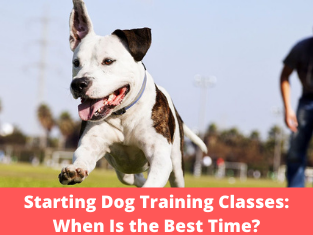 Starting Dog Training Classes: When Is the Best Time?